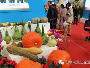 【异地传声】黑龙江(广州)绿博会上羊城人为龙江绿色食品点赞